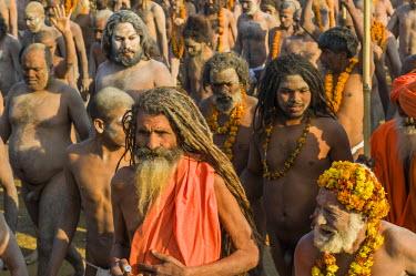 IBLFBD03152768 Crowds of naked Naga sadhus, holy men, participating in the procession of Shahi Snan, the royal bath, during Kumbha Mela festival, Allahabad, Uttar Pradesh, India