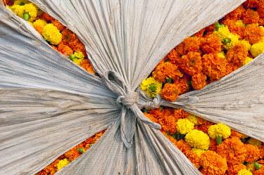 IBLOMK02294919 Marigold flowers, flower market, Howrah Bridge, Kolkata or Calcutta, West Bengal, East India, India