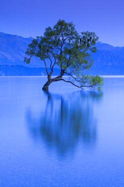 NZ02626 New Zealand, South Island, Otago, Wanaka, Lake Wanaka, solitary tree, dawn