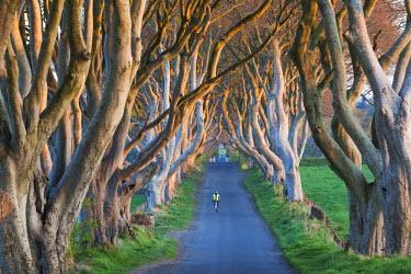 UK04153 UK, Northern Ireland, County Antrim, Ballymoney, The Dark Hedges, tree lined road, dawn