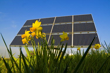 IBLDJS01127535 Solar modules with flowers in the foreground, from below