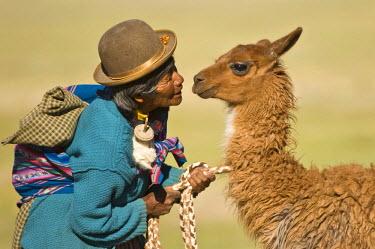 IBLGAB01596613 Bolivian woman training a young llama (Lama glama), San Juan, Potosi, Bolivia