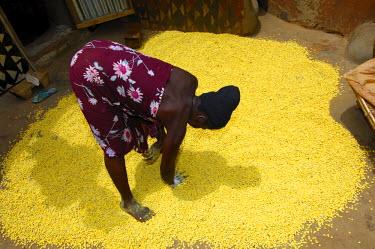 IBLGUF00609699 Woman prepares seeds of the African locust bean tree, Parkia biglobosa, for drying on the floor, Burkina Faso, West Africa, Africa