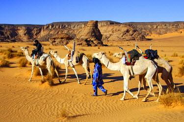 IBLGUF00259236 Tuareg nomads with white Mehari riding dromedaries, Acacus Mountains, Libya, Africa