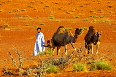 IBLGVA00835627 Nomad children with camels in the Wahiba Sands, Ramlat al Wahaybah, Oman