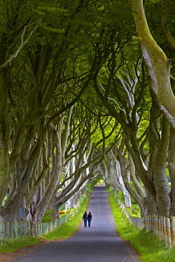 INT00973917 Great Britain, Northern Ireland, Antrim, Bregagh Road, near Armoy, Two girls walking down the road known as the Dark Hedges.