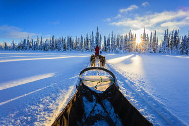 INT01098617 Finland, Riisitunturi national park, Posio, dog sled, winter landscape, huskies, Riisitunturi national park, Finland, Scandinavia, Lapland,