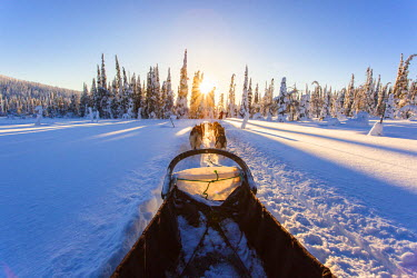 INT01098812 Finland, dog sled, winter landscape, huskies, Riisitunturi national park, Finland, Scandinavia, Lapland,