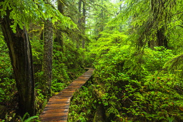 INT01108377 Canada, Rainforest Trail, Pacific rim national park, Vancouver Island, British Columbia,