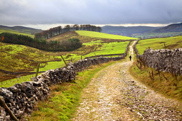 INT01115797 Great Britain, England, Horton in Ribblesdale, Lone Walker on Horton Scar Lane near Horton in Ribblesdale North Yorkshire