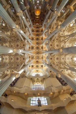 IBLBLO02185789 Church ceiling, tree-shaped pillars and ceiling, interior of Sagrada Familia, Basilica i Temple Expiatori de la Sagrada Familia, Basilica and Expiatory Church of the Holy Family, by Antoni Gaudi, UNES...