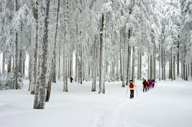 IBLDJS03748323 Snow-covered forest with cross-country skiers, Thurner, Sankt Margen, Black Forest, Baden-Wurttemberg, Germany