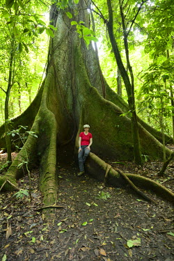 IBLSHU02298680 Woman standing in front of a Kapok Tree (Ceiba pentandra), in the tropical rain forest, Rincon de la Vieja National Park, Guanacaste, Costa Rica, South America, North America