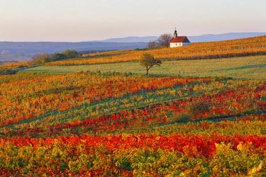 IBXMAN04080160 Autumnal vineyards, wine garden chapel in Neckenmarkt, Oberpullendorf District, Burgenland, Austria