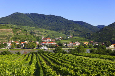 IBXMAN01680943 Spitz, view overlooking vineyards in Oberarnsdorf, Danube, Wachau, Waldviertel, Mostviertel, Lower Austria, Austria