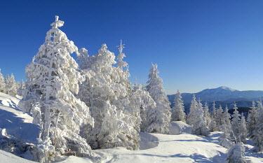 IBXCGH00017661 A winter dream on the mountain Unterberg in the background the mountain Schneeberg Lower Austria