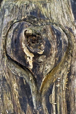 IBXDJS03748214 Wooden heart carved Into a tree trunk, Germany