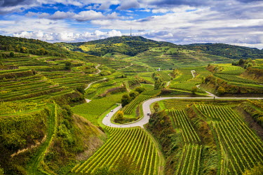 IBXDJS04321343 Autumnal vineyards near Oberbergen, Kaiserstuhl, Baden-Wurttemberg, Germany