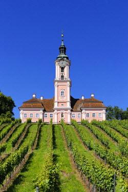 IBXMAN04303231 Birnau pilgrimage church with vineyard, Uhldingen-M ���hlhofen, Bodenseekreis, Upper Swabia, Baden-Wurttemberg, Germany