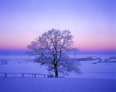 IBXMSI00051521 Winter morning oak Muensing Upper Bavaria Germany
