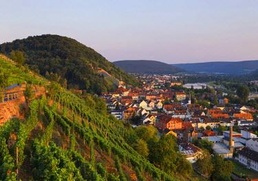 IBXMAN04241038 Vineyard on Schlossberg or Castle Hill, Klingenberg am Main, Spessart, Mainviereck, Lower Franconia, Franconia, Bavaria, Germany