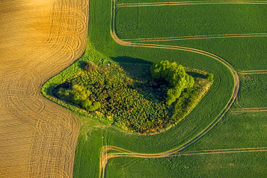 IBXBLO03987955 Aerial view, copse, fields, M ���hl Rosin, Mecklenburg-Western Pomerania, Germany