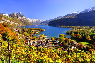 IBXDAB03921534 Views of the autumnal Weesen on Walensee, vineyard in the foreground, Weesen, Canton of St. Gallen, Switzerland