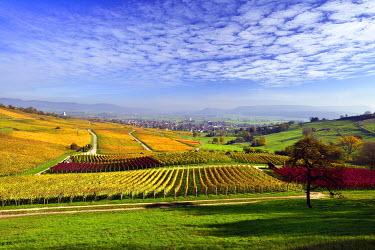 IBXDAB04017954 Vineyards in autumn with views of the Klettgau, cirrocumulus clouds in the sky, Oberhallau, Hallau, Klettgau, Canton of Schaffhausen, Switzerland