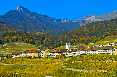 IBXGVA04254478 Yvorne village surrounded by vineyards in autumn, Yvorne, Canton of Vaud, Switzerland