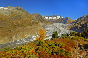 IBXHUW00146948 Aletsch glacier with view of the central moraine, Goms, Valais, Switzerland