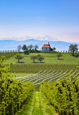 IBXMAN04358875 Apple plantation, orchard, Antoniuskapelle in Selmnau near Wasserburg at Lake Constance, mountain S���vт��ntis in Switzerland in background, Allg���vт��u, Swabia, Bavaria, Germany