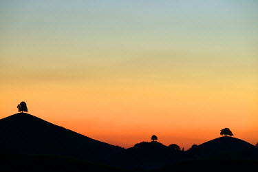 IBXSHU03719753 Trees silhouetted  on moraine hills at dusk, Hirzel, Canton of Zurich, Switzerland