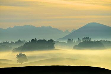 IBXSHU03744069 Autumn fog atmosphere in Swiss Plateau or Central Plateau, Hirzel, Canton of Zurich, Switzerland
