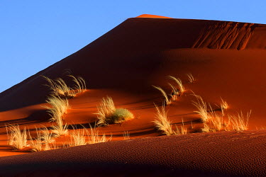 IBXHAL04094983 Sand dune covered with tufts of grass, evening light, Namib Desert, Namibia, Africa