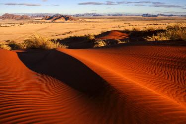 IBXHAL04100189 Elim Dune, view onto grass steppe at Sesriem Camp, Namib Desert, Namib Naukluft Park, Namibia, Africa