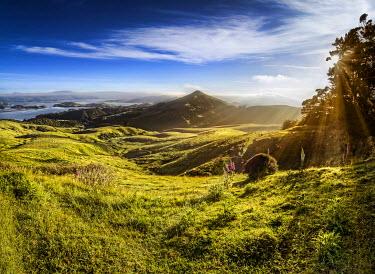 IBXGZS02298015 Sheep grazing meadows in raking light, sun rays of the warm morning sun, Hoopers Inlet Bay, Otago Peninsula, South Island, New Zealand, Oceania