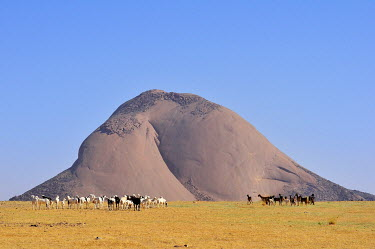 IBXGIV04134391 Herd of goats in front of the Aicha monolith in the flat desert, Adrar region, Mauritania, Africa