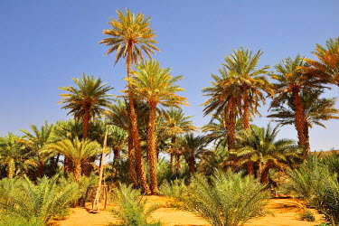 IBXGIV04177633 Simple drawing well with date palms, Rachid oasis, Tagant region, Mauritania, Africa