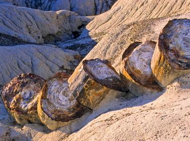 IBXGZS00833903 Petrified tree trunk, Petrified Forest National Park, Arizona, USA, North America