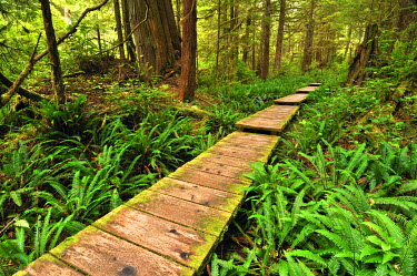 IBXGZS01181049 Path made of wooden beams, leading through the rainforest to Sand Point, Olympic National Park, Washington, USA, North America