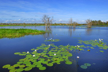 IBXHUW00146622 Wetland. Kakadu Nationalpark, Yello Water, Northern Territory, Australia, Oceania