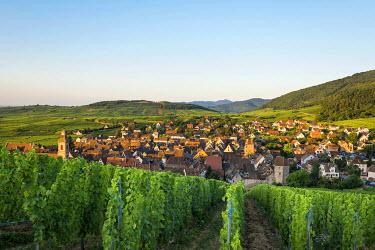IBXDJS04219931 Village and vineyards at sunrise, Riquewihr, Alsace, France