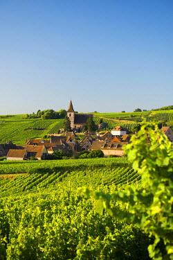 IBXDJS04219945 Village in the vineyards, Hunawihr, Alsace, France
