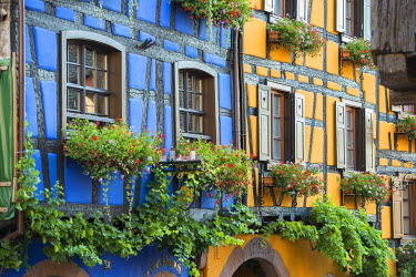 IBXDJS04219952 Colourful half-timbered houses, Riquewihr, Alsace, France