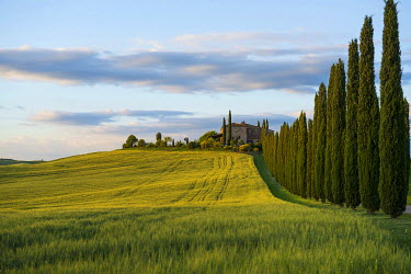IBXDJS03929978 Cypress avenue, evening light, Val d'Orcia, UNESCO World Heritage Site, near San Quirico d'Orcia, Province of Siena, Tuscany, Italy