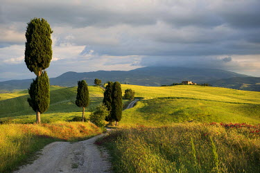 IBXDJS03947517 Landscape with dirt road and cypresses, UNESCO World Heritage Site Val d'Orcia, near Pienza, Province of Siena, Tuscany, Italy
