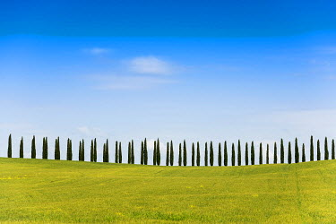 IBXDJS04063921 Line of cypress trees, near San Quirico d'Orcia, Val d'Orcia, Province of Siena, Tuscany, Italy
