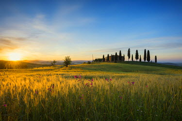IBXDJS04063929 Sunrise, landscape with farmhouse and cypress trees, near Pienza, Val d'Orcia, Province of Siena, Tuscany, Italy