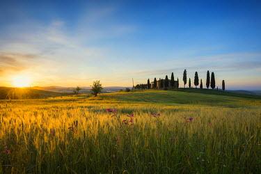 IBXDJS04063929 Sunrise, landscape with farmhouse and cypress trees, near Pienza, Val d'Orcia, Province of Siena, Tuscany, Italy