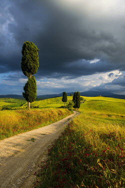 IBXDJS04063947 Landscape with rural road, near Pienza, Val d'Orcia, Province of Siena, Tuscany, Italy
